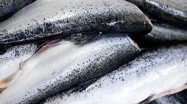 JH Staalindustri A/S - Branche: Fiskeindustri